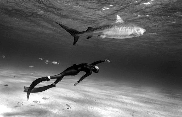 Hanli Prinsloo - Tiger Shark