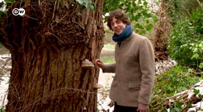 Biologist Merlin Sheldrake and the world of fungi | Deutsche Welle